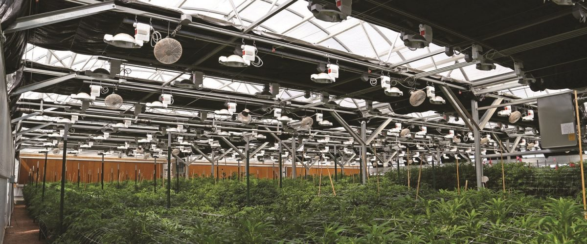 Marijuana Growing Facilities
